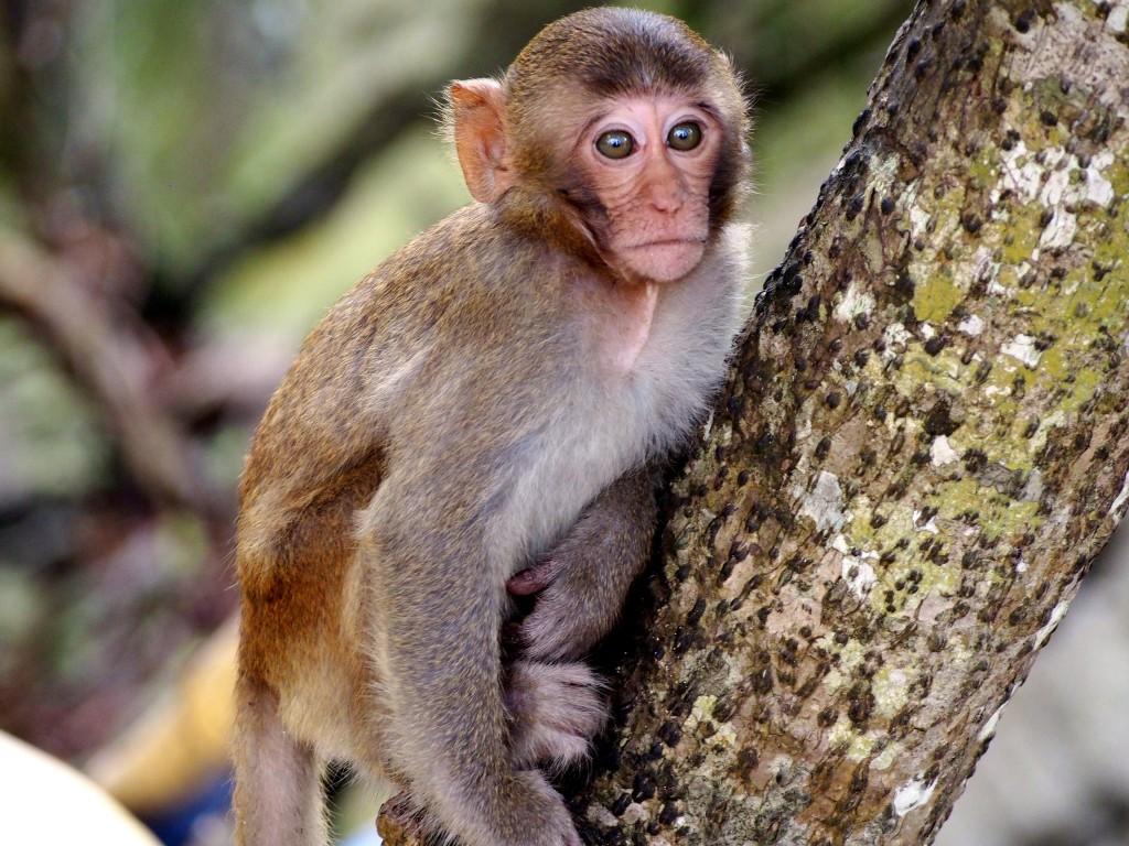 ha long bay monkey island