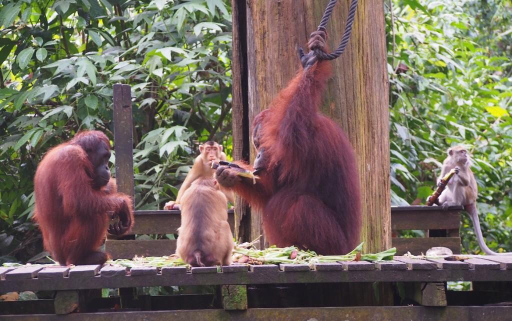 A jungle affair