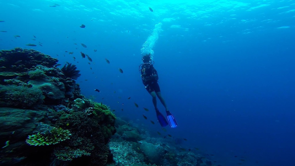 why you should learn to scuba dive