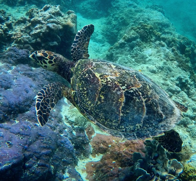Scuba Diving in the Gili Islands