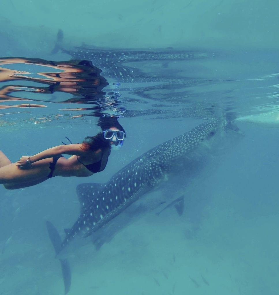whale sharks in cebu